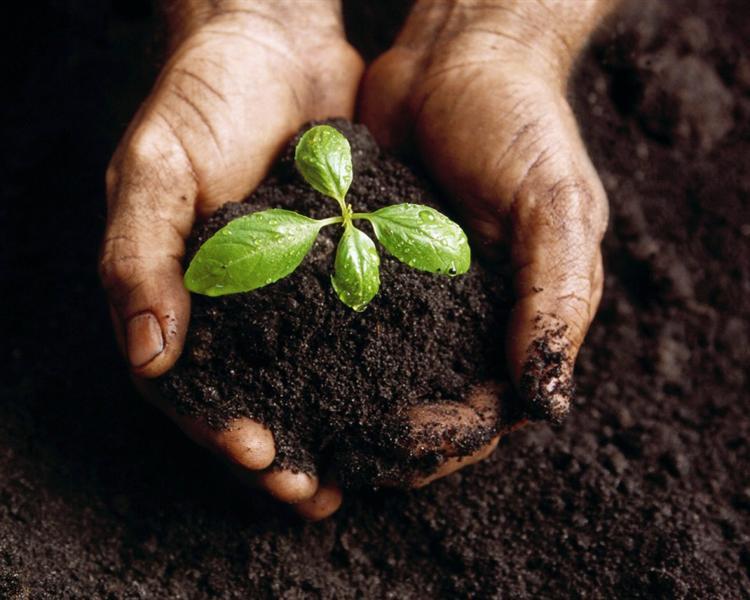 Photo du Amendements organiques Compost