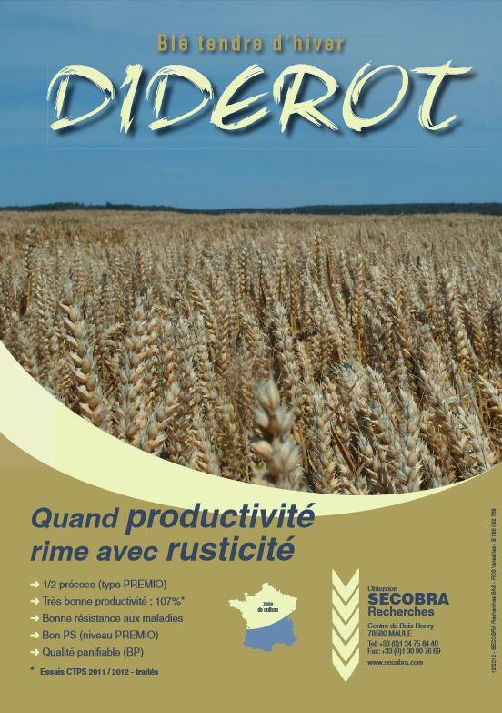 Photo du variétés blé d'hiver Diderot