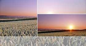 Photo du Régulateurs céréales C5 Flex