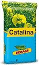 Photo du variétés de colza d'hiver Catalina