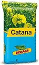 Photo du variétés de colza d'hiver Catana