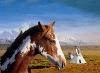 Photo du variétés de betteraves sucrières Cheyenne