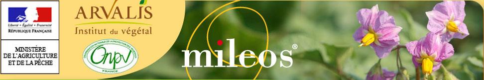 Photo du Services et logiciels de surveillance des cultures Mileos