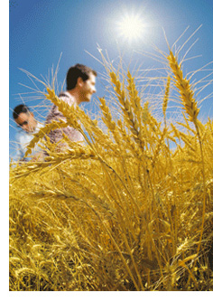 Photo du Herbicides céréales Ergon