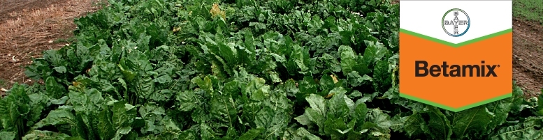 Photo du Herbicides cultures industrielles Betamix