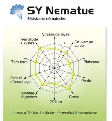 Photo du variétés de betteraves sucrières SY Nematue