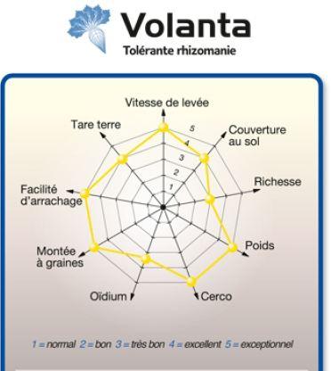 Photo du variétés de betteraves sucrières Volanta
