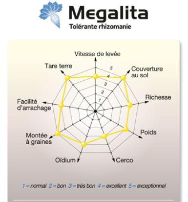 Photo du variétés de betteraves sucrières Megalita