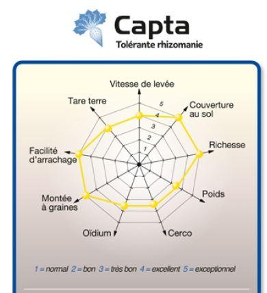 Photo du variétés de betteraves sucrières Capta