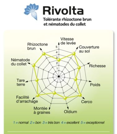 Photo du variétés de betteraves sucrières Rivolta