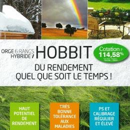 Photo du variétés d'orge d'hiver 6 rangs Hobbit