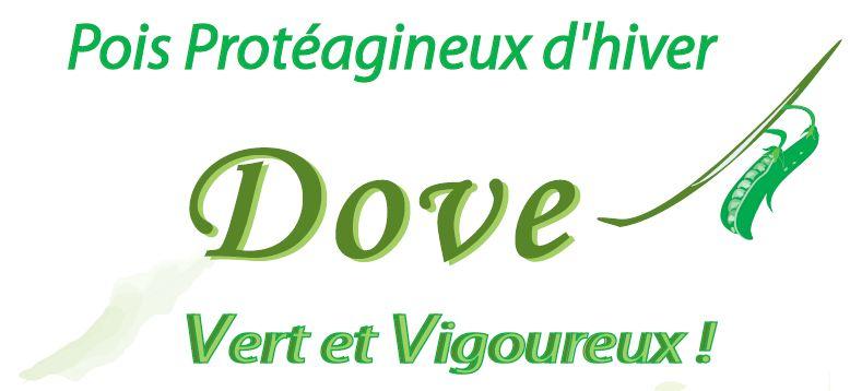 Photo du variétés de pois d'hiver Dove