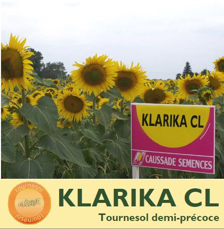 Photo du Hybride simple Klarika CL