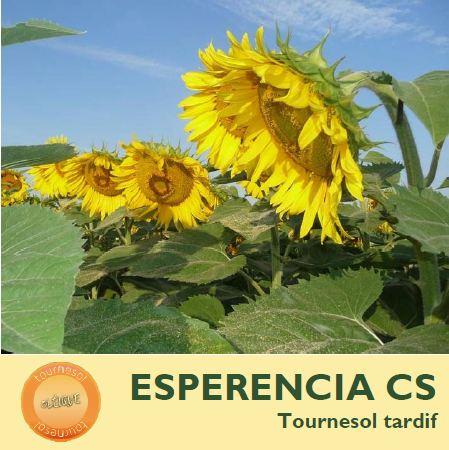 Photo du Hybride simple Esperancia CS