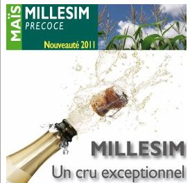 Photo du Variétés de maïs mixte Millesim